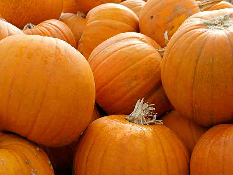 Halloween events in Gloucestershire