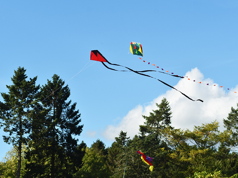 Kite Day in the Forest of Dean