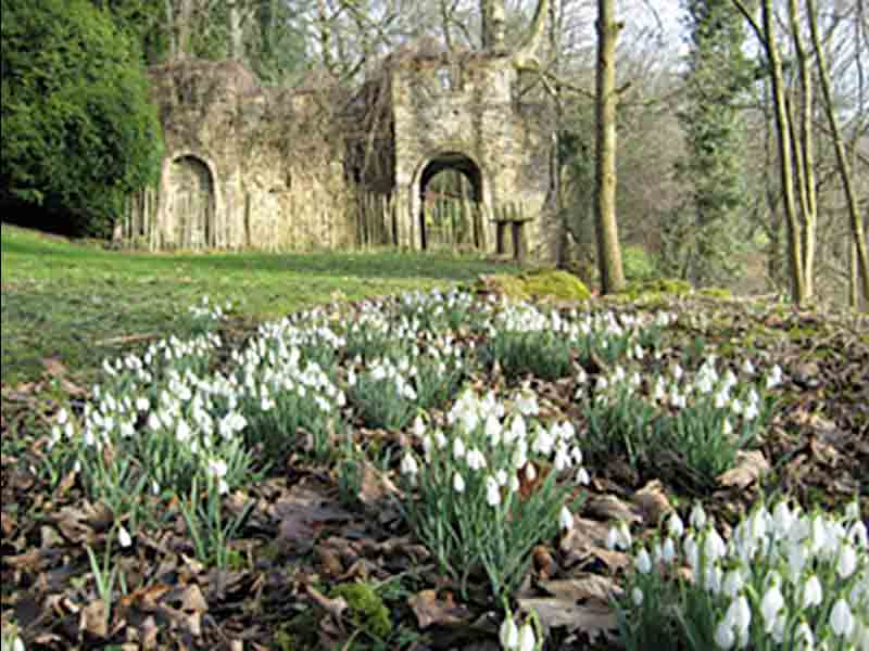 Snowdrops at Newark Park