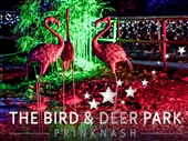 Christmas Wonderland at Prinknash Bird & Deer Park