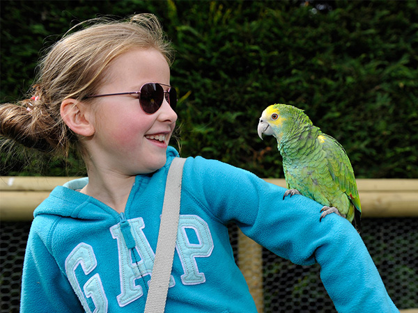 School holiday events at Birdland in Gloucestershire