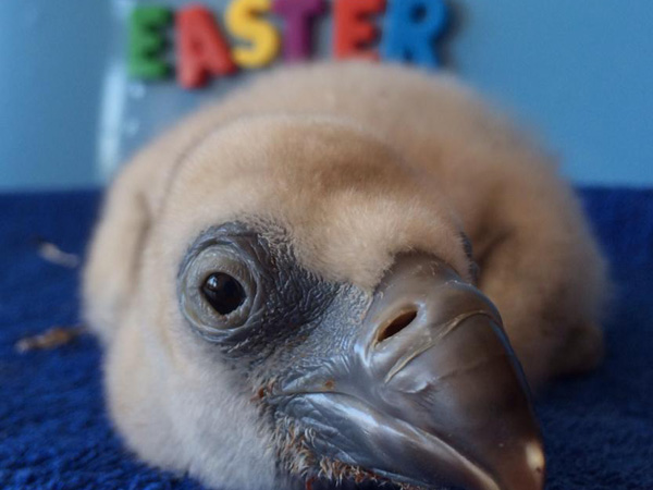 Easter at International Centre for Birds of Prey