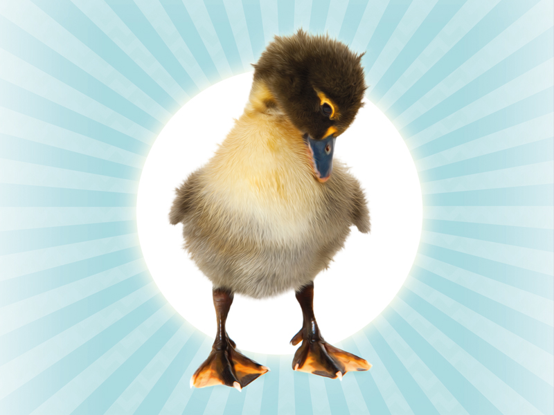 Ugly Duckling presented by Northern Ballet at the Everyman Theatre
