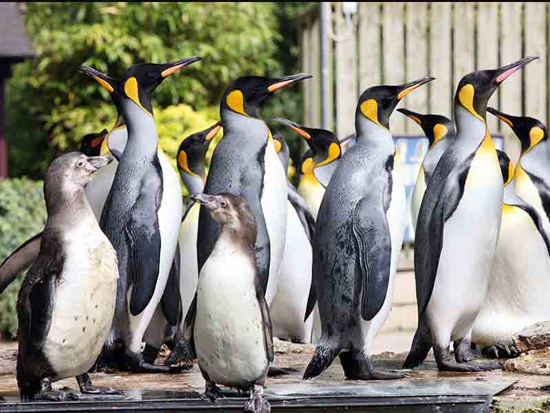 World Penguin Day events in Gloucestershire