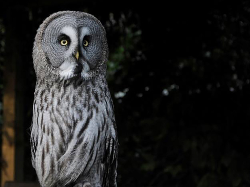 Owl Evening at Cotswold Falconry Centre