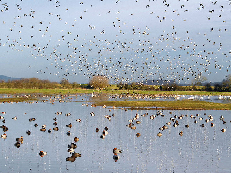 What's on at WWT Slimbridge