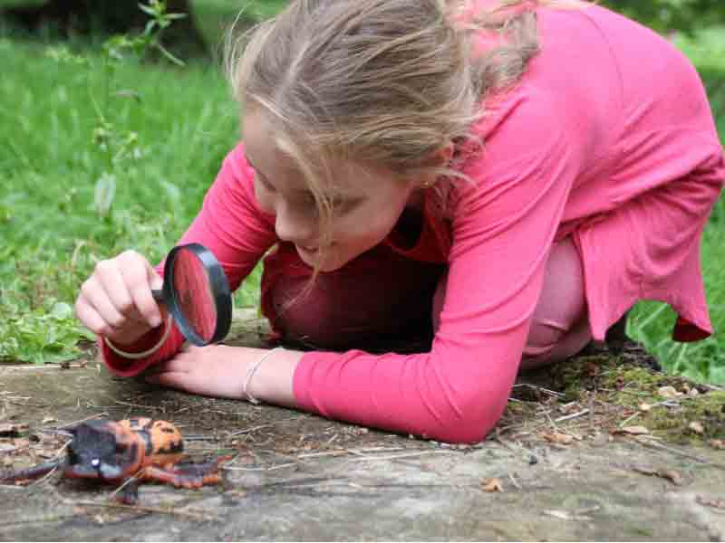 School holiday events at Batsford Arboretum