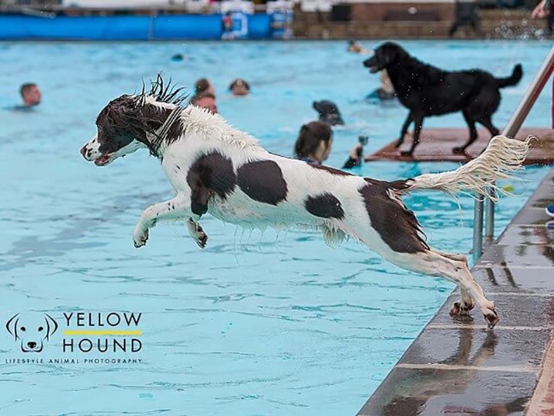 Dog Swim at Sandford Parks Lido