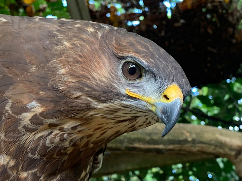 What's on at Cotswold Wildlife Park