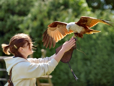The International Centre for Birds of Prey located near Newent, Gloucestershire