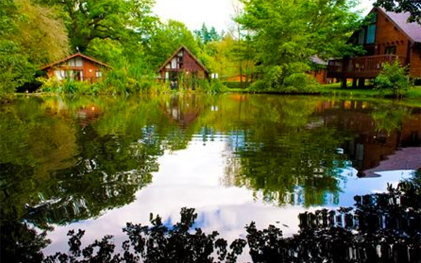 Whitemead Forest Park - Cabins and Lodges in the Forest of Dean