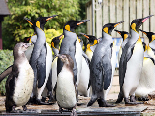 Brand new event: Penguin Week at Birdland