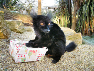 Alternative Christmas Presents from Cotswold Wildlife Park