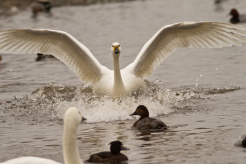 Latest News from WWT Slimbridge