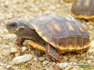 Tiny tortoises surprise at Cotswold Wildlife Park