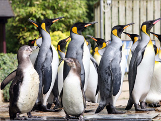 World Penguin Day in Gloucestershire
