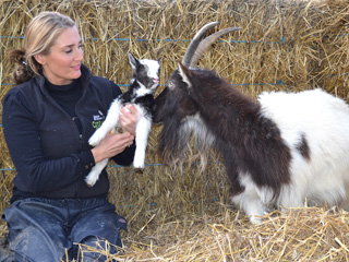 A double celebration for Cotswold Farm Park's oldest Bagot goat