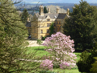 Japanese Flowering Cherries reach their blossomy peak at  Batsford Arboretum