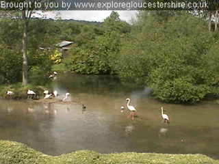 New webcam at Birdland installed by Explore Gloucestershire