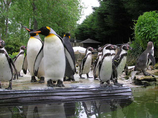 Offer of the Week: FREE child entry to Birdland Park and Gardens