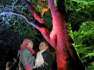 Experience a festive feast of lights at Westonbirt this Christmas