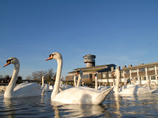 WWT Slimbridge Scoops Double Gold in Cotswold Tourism Awards