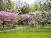 Spring is in full swing at Batsford Arboretum