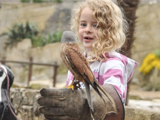 "A night full of memories: ""Dreamnight At The Zoo"" at Cotswold Wildlife Park"