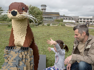 Latest news from WWT Slimbridge's LEGO ®  Brick Trail