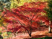 Autumn at Batsford Arboretum
