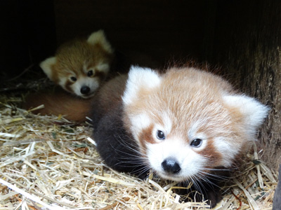 New arrivals at Cotswold Wildlife Park