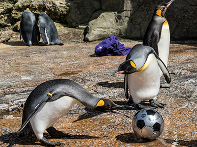 Euro Football Fever at Birdland Park & Gardens