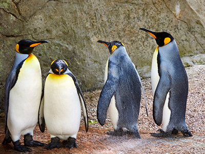 Celebrate Afternoon Tea Week with the Penguins