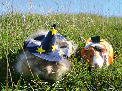 Halloween fun with Adam Henson's Cotswold Farm Park