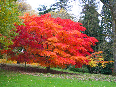 Batsford Arboretum enjoys best autumn colour for 30 years