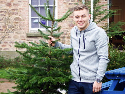 Christmas Tree sales in the Forest of Dean