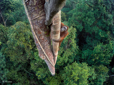 Wildlife Photographer of the Year 2017 at Nature in Art