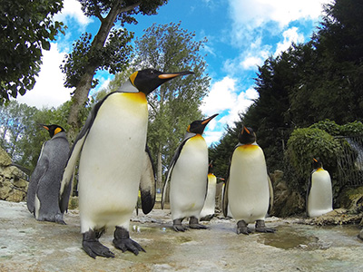 Penguin Awareness Day at Birdland, Park & Gardens