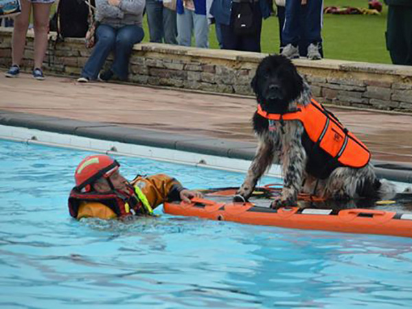 Sandford Parks Lido Rescue Day 2017