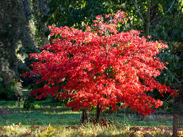 Autumn arrives early at Batsford Arboretum
