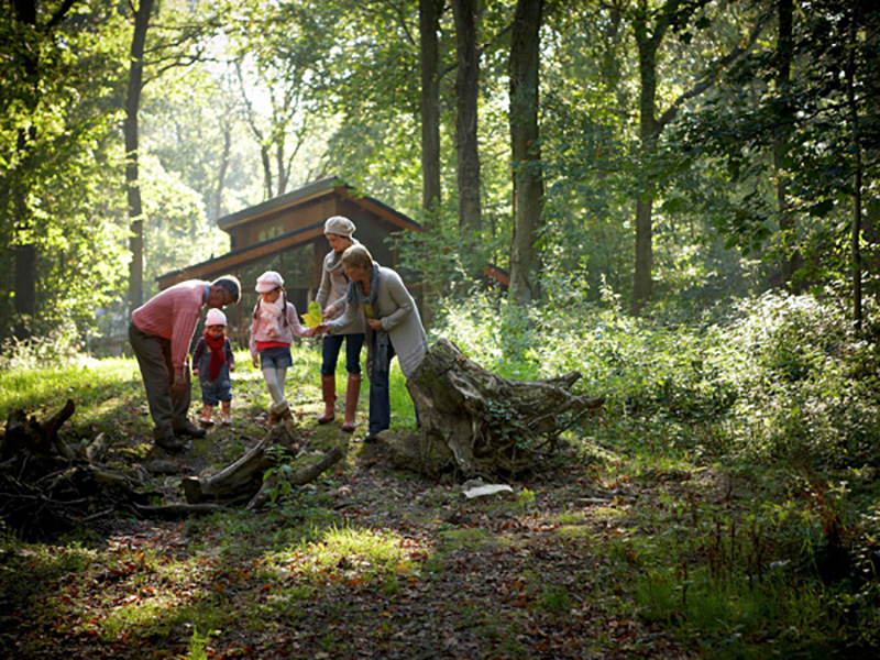 10% OFF FOREST HOLIDAY CABINS