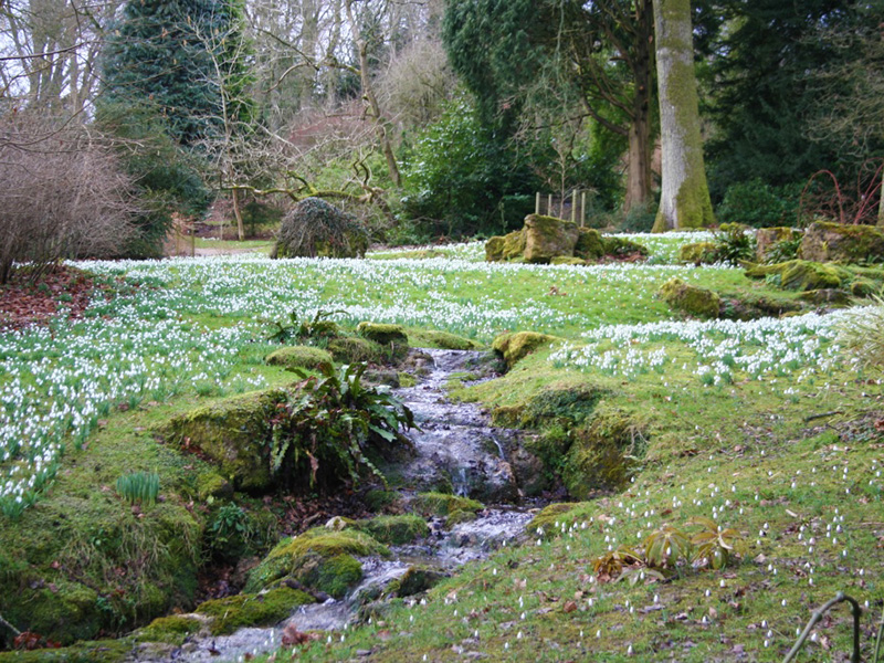 Swathes of snowdrops at beautiful Batsford Arboretum