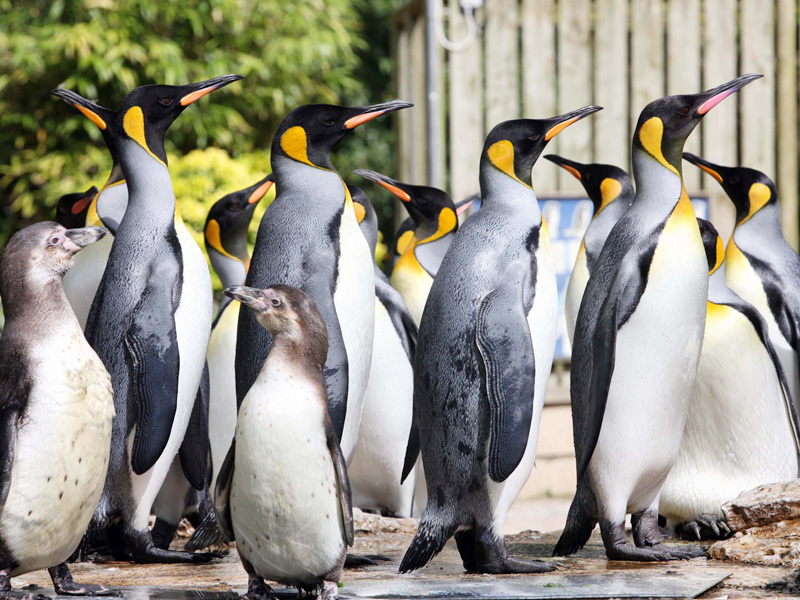 Celebrate like a King... Penguin at Birdland on 25 April