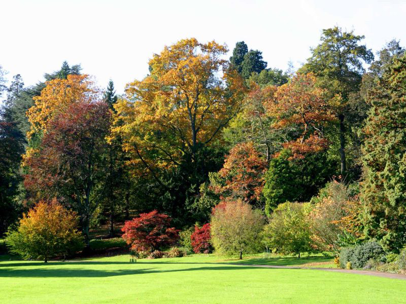 Batsford Arboretum predict a spectacular autumn thanks to extreme weather
