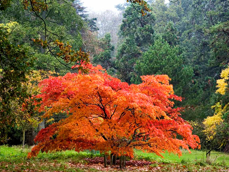 Magnificent autumn colour survives storm Callum