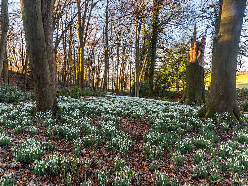 Snowdrops are blooming early at Rococo Garden