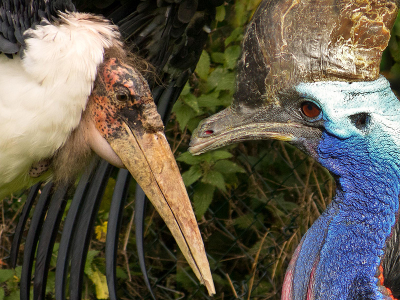 Birdland celebrates 'Feathered Fiends' for February Half Term Holidays