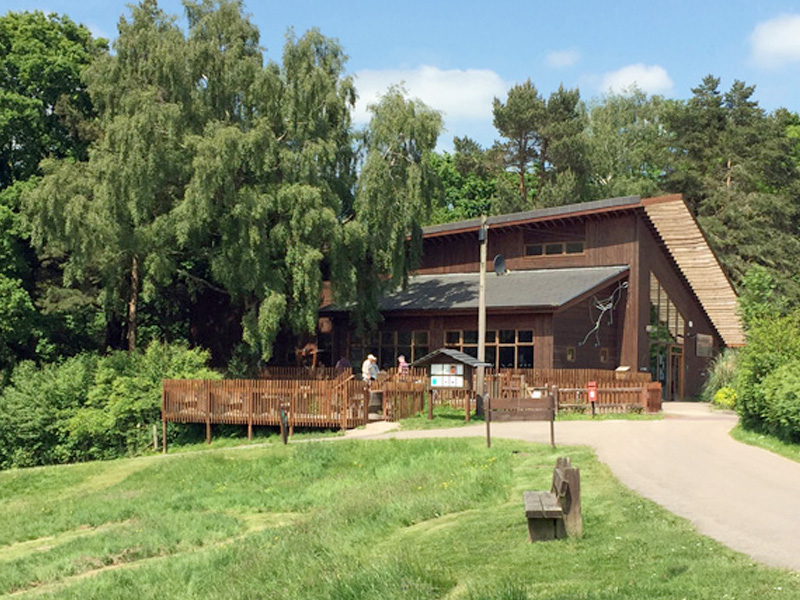 A Cabin Holiday at Forest Holidays in the Forest of Dean