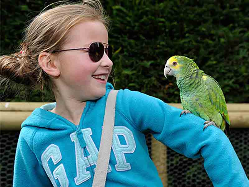 What's on at Birdland in the Cotswolds