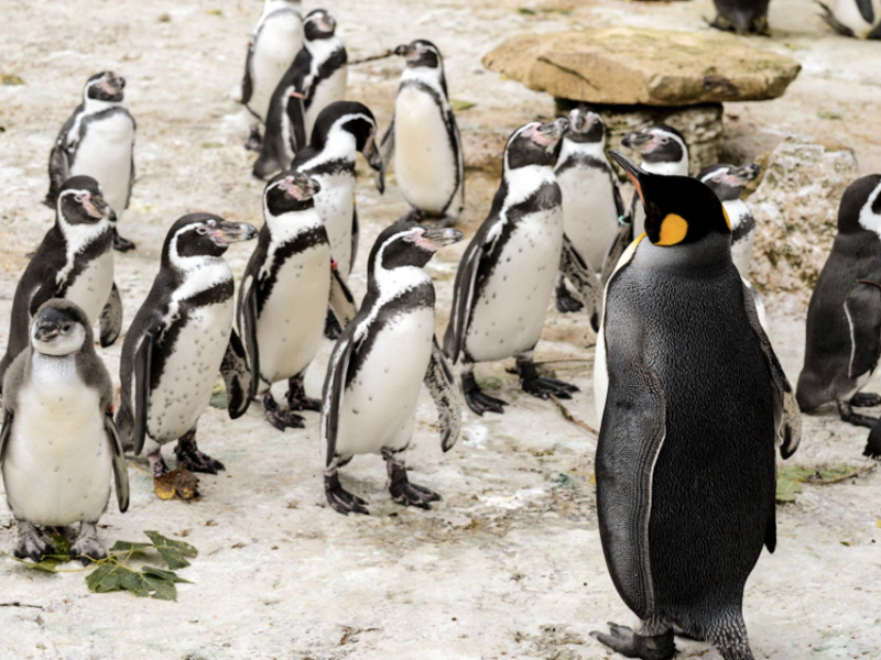 Hop Along To Birdland and Meet the Penguins This May Half Term